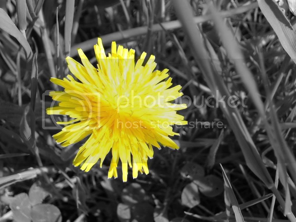 Yellow Flower Pictures, Images and Photos